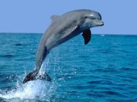 Delphin- und Walessenzen